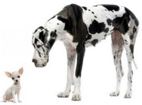 la socialisation / l'habituation - éducation et comportement