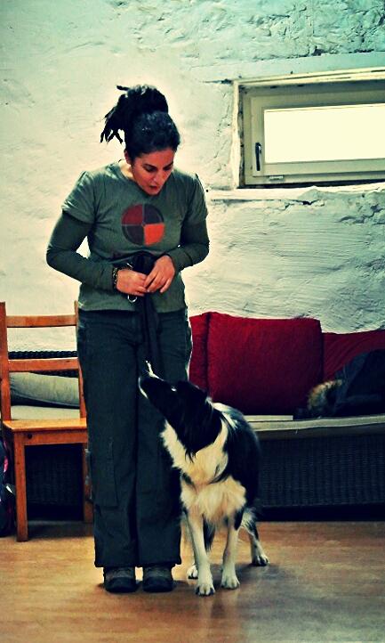 Comportementaliste et éducateur canin